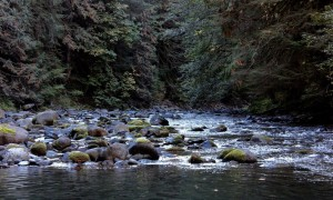 Salmon River, Mt. Hood National Forest